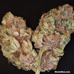 The OX Cannabis Strain