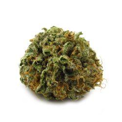 Versace Cannabis Strain