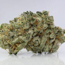 White Romulan Cannabis Strain