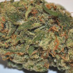 XJ-13 Cannabis Strain