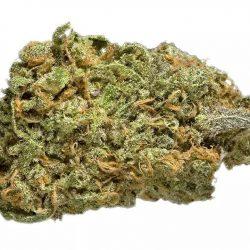 Jack's Dream Cannabis Strain