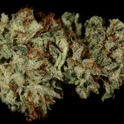 Pre-98 Bubba Kush Cannabis Strain