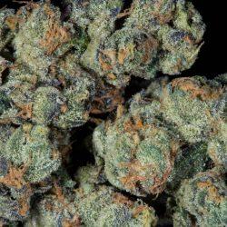 Star Killer Cannabis Strain