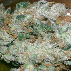 Strawberry Frost Cannabis Strain