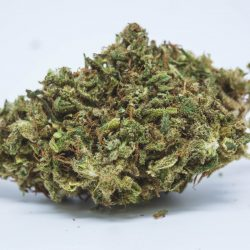Thai Cannabis Strain