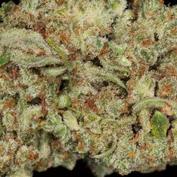 Ultimate Trainwreck Cannabis Strain