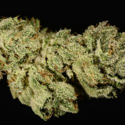 Ultra Sonja Cannabis Strain