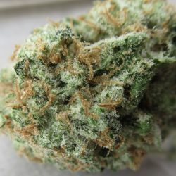 West Coast Dawg Cannabis Strain