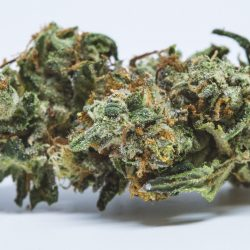 White Buffalo Cannabis Strain