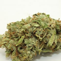 White Fire Alien OG Cannabis Strain