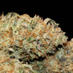 Wookie Cannabis Strain