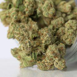 Yoda OG Cannabis Strain