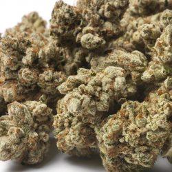 Yogi Diesel Cannabis Strain