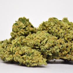 Zeta Sage Cannabis Strain
