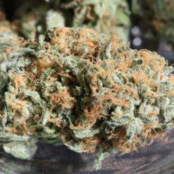 Zkittlez Cannabis Strain