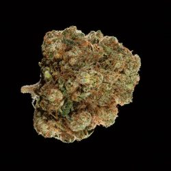 Kelly Hill Gold Cannabis Strain