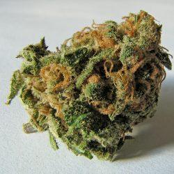 LA Kush Cannabis Strain