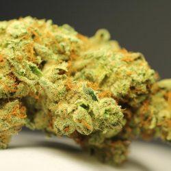 Magic Jordan Cannabis Strain