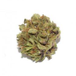 Northern Berry Cannabis Strain
