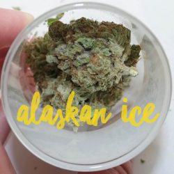Alaskan Ice Cannabis Strain
