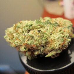 Ogre Berry Cannabis Strain