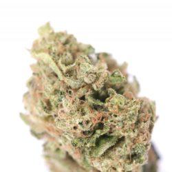 Rebel Berry OG Cannabis Strain