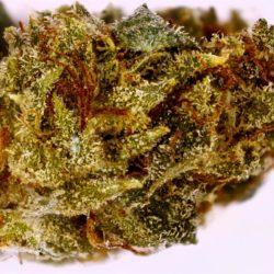 Robert Plant Cannabis Strain