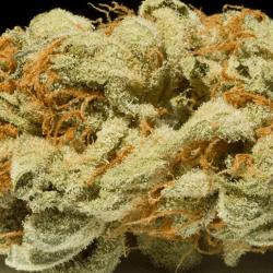 Romulan Grapefruit Cannabis Strain