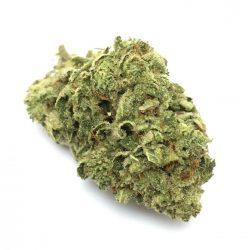 Santa Sativa Cannabis Strain