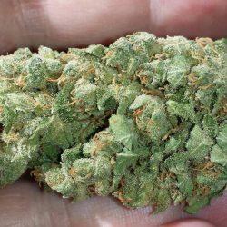 Schrom Cannabis Strain