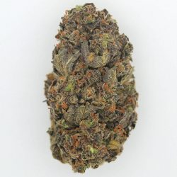 Chocolate Kush Cannabis Strain