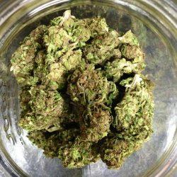 Haze Heaven Cannabis Strain