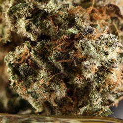 Himalayan Blackberry Cannabis Strain